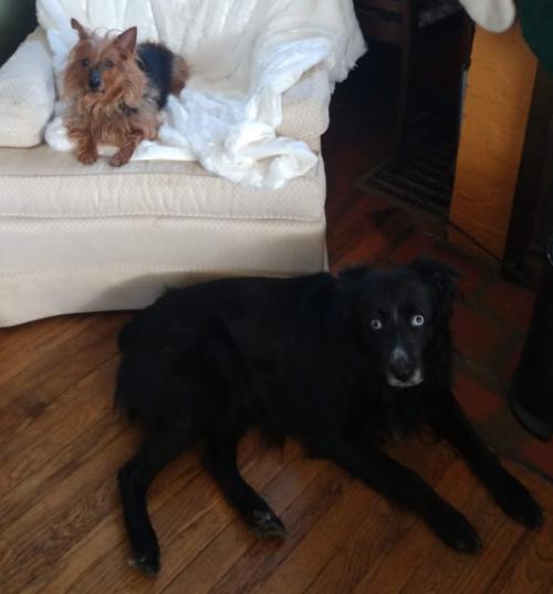 Lovable Leo (the black dog)