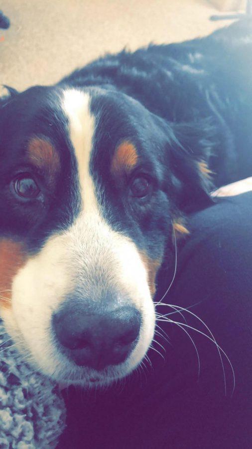 Bailey the bubbly dog