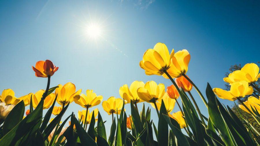Top+ten+spring+activities
