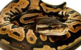 Top ten snakes to make your friend