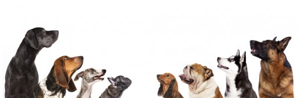 Survey: What is your favorite dog breed?